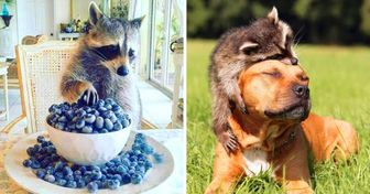 20 Pictures That Prove Raccoons Are Best at Being Themselves