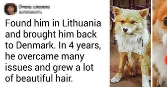 15 Animals That Were Transformed by People's Love