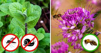 7 Plants That Will Keep Pests Out of Your Garden, and 7 Plants That Will Attract Pollinators