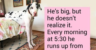 16 Dogs That Will Never Stop Being Cute No Matter How Big They Are