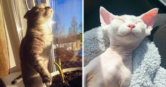 20 Times Pets Proved to Be Aliens Who Recharge From the Sun