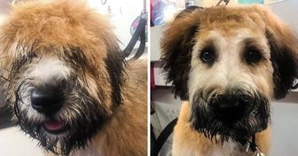 "22 Times Bright Siders Got ""New"" Dogs After Visiting a Groomer"