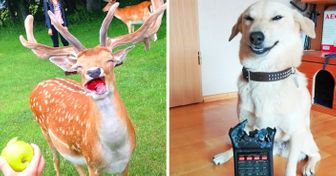 18Animals Who Know How toPose for aPerfect Shot