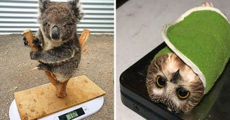 Animal Care Workers Share 15+ Photos of How They Weigh Our Little Pals