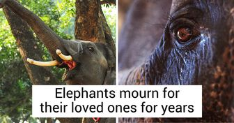 12 Facts That Prove Animals Can Be Even More Humane Than We Are