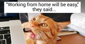 17 Reddit Users Showed Who Their Boss Really Is When They Work From Home