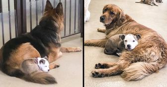 A Dog Picks Only Fluffy Dogs at Day Care to Take a Nap on Them