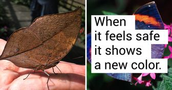 Don't Trust Your Eyes, This Leaf Is Actually a Butterfly