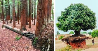 20 Trees Whose Desire to Live Is So Strong, They Can Survive Anything