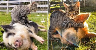 My Name Is Ernest. I'm a Farm Cat and I Just Can't Stop Massaging My Fluffy Friends