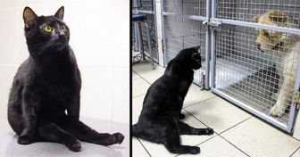 This Cat Can't Walk, but That Doesn't Stop Him From Helping Other Sick Animals
