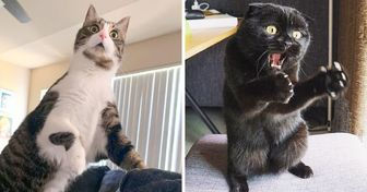 23 Photos That Prove You'll Never Get Bored If You Have a Cat