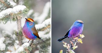 Nature Has Created a Fairy-Tale-Like Bird That Seems to Have Come From Paradise, and We're in Awe