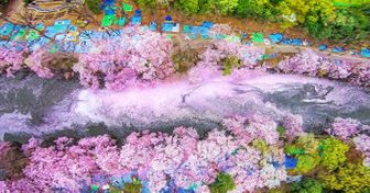 15Breathtaking Images That Capture the Beauty ofCherry Blossoms Across the World