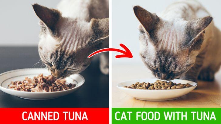 9 Bežné jedlá, ktoré môžu skutočne poškodiť vášho domáceho maznáčika