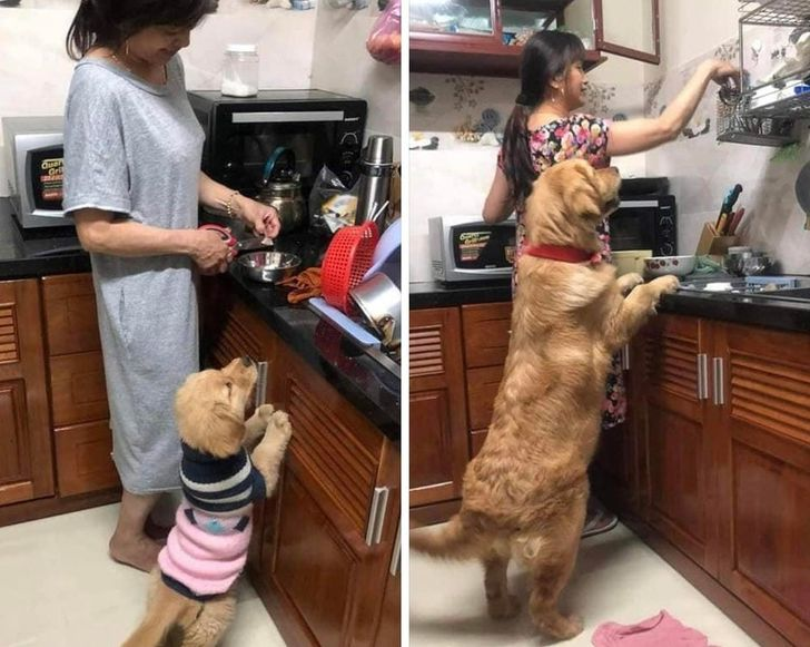 20 Photos That Made Us Adore the Friendship Between Animals and Their Hoomans