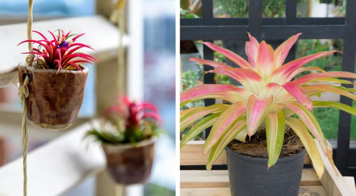 15 Houseplants That Are Good for Your Health