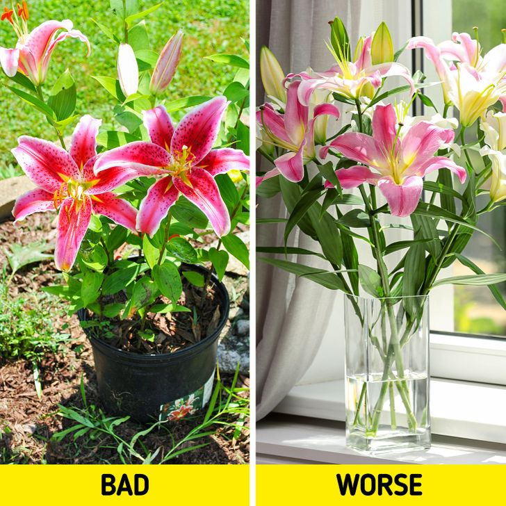 10 Plants That Can Harm Our Cats (and Some That Are Good for Them Too)