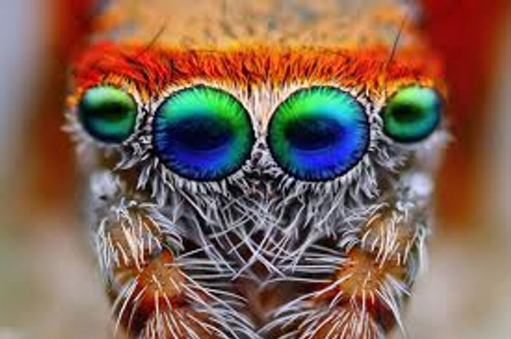 15 Creatures Whose Eyes Are So Beautiful, They're Hypnotizing