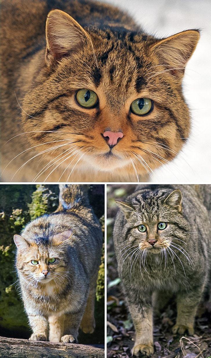 The 16 Rarest Cat Breeds Ever