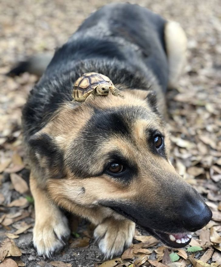 17 Animal Photos That'll Heal Your Soul Better Than Psychotherapy