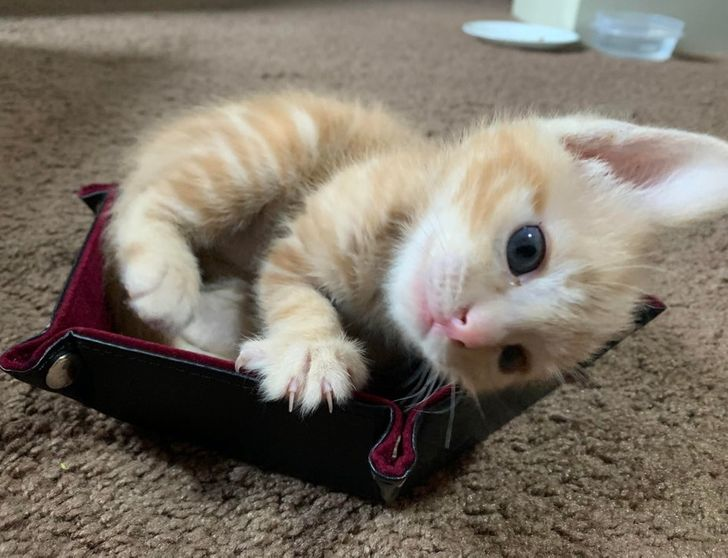20 Kittens That Will Help You Find Your Smile
