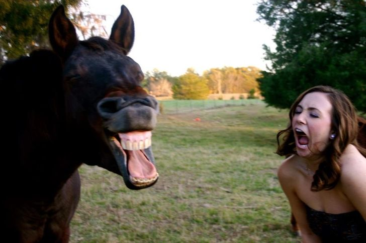 20+Animal Photos That Were Taken atthe Perfect Moment