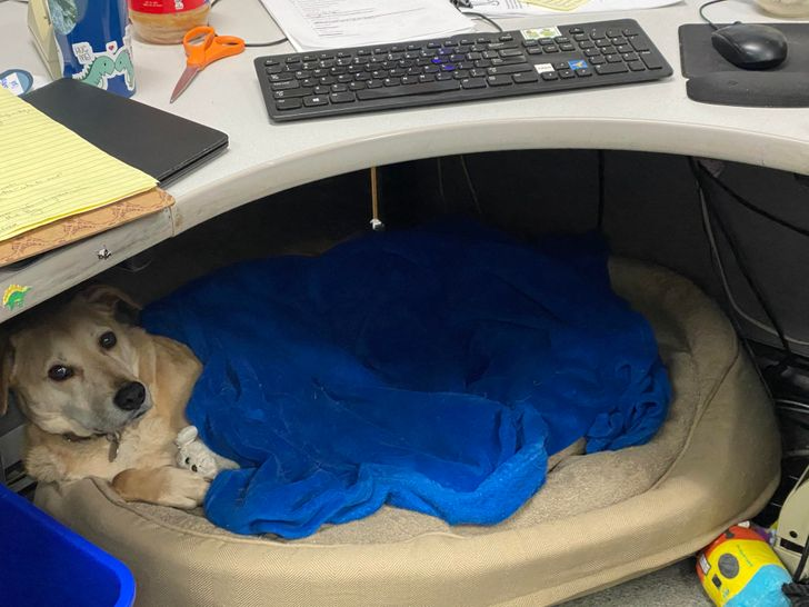 "20+ Tireless Dogs Who Could Become ""Employee of the Month"""