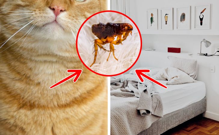 5 Things to Be Aware of When Letting Your Cat in Your Bed