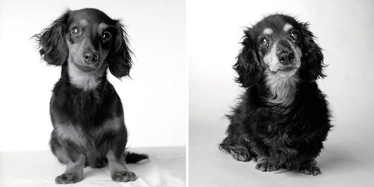 How dogs get older: Afascinating and deeply touching photography project
