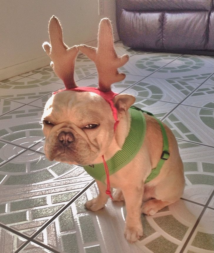 21 Pets Who Totally Aren't Into This Whole Christmas Thing