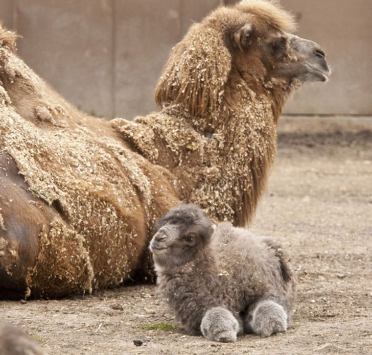 15 Baby Animals That Will Melt Even the Coldest Heart