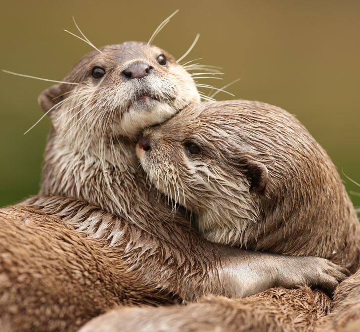 7 Animals Who Belong to Their Partners Forever
