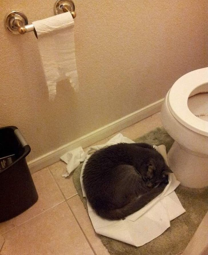 20 Hysterical Times Our Cats' Settings Crashed