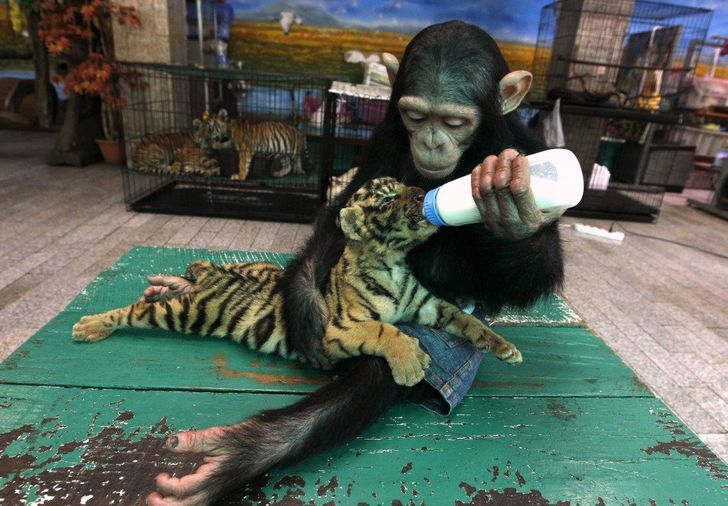 18Kind Animals That Adopted Other Species