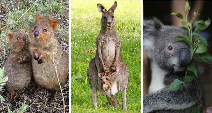 21reasons why Australia might bethe best place onEarth