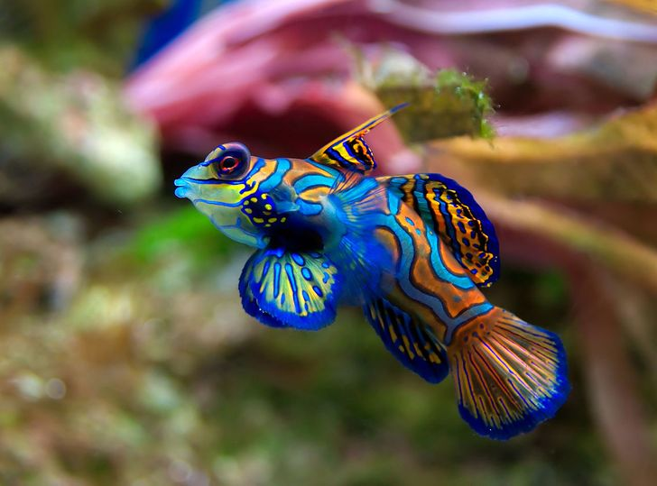19 Rare Animals Boasting Unique Colors