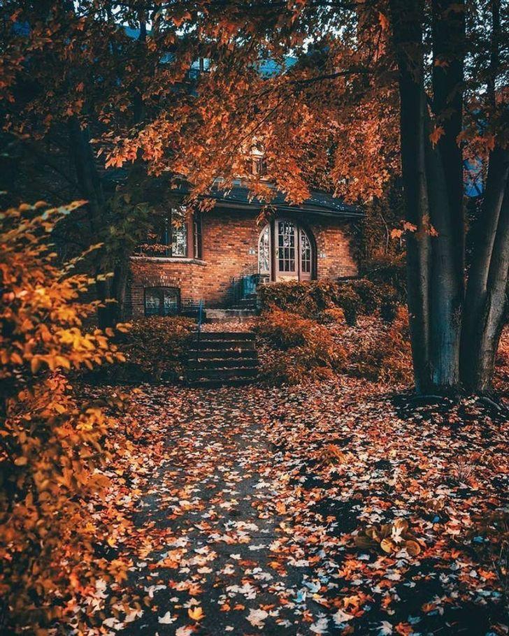 Az emberek megmutatják, hogy néz ki az ősz a világ minden tájáról