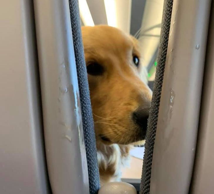 A Puppy Got Bored During a Long Flight and Entertained His Neighbors for Fun. This is Exactly the Vibe You Need to Survive a Long Day at Work