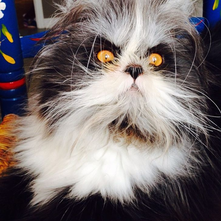 26Adorably Imperfect Pets That Melted Our Hearts