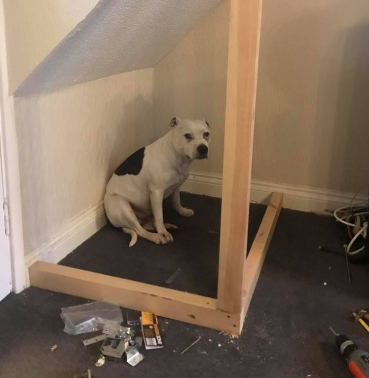 A Man Built a Mini-House for His Dog With Trust Issues to Help Him Feel Safe