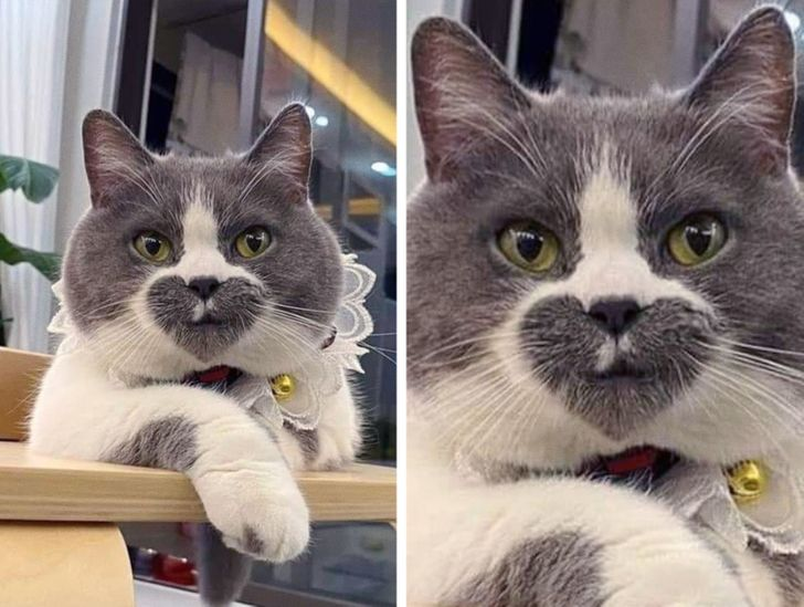 20+ Cats That Made Us Wonder If Nature Used Photoshop to Create Them