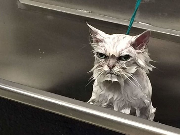 26 Animals That Look So Angry, They're Cute