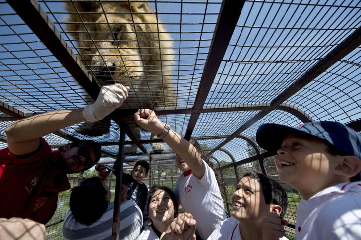 Not for the Faint-Hearted: AReversed Zoo Where People Are inCages, and Animals Are Free
