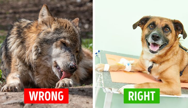 10 Myths About Pet Care That We've Believed Were True for Years