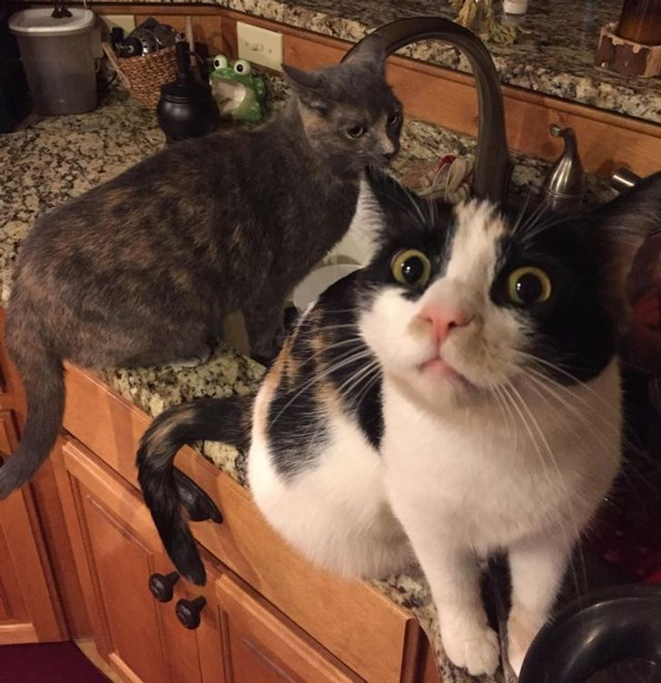 20 Cats That Let Us Know Who Actually Sets the House Rules