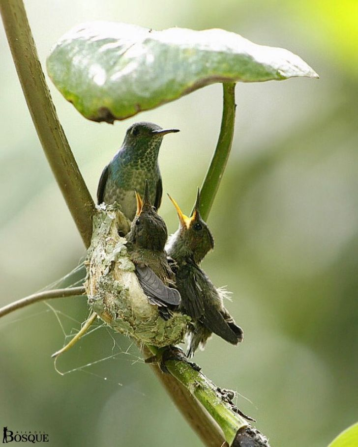 A Hummingbird Builds a Nest With a Roof, and It's the Coziest Little Home in Town