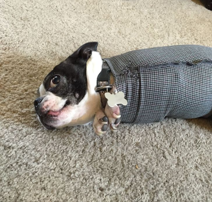 20+ Pics That Prove Our Pets Have Their Own Kind of Logic, and We Are Not Even Close to Understanding It