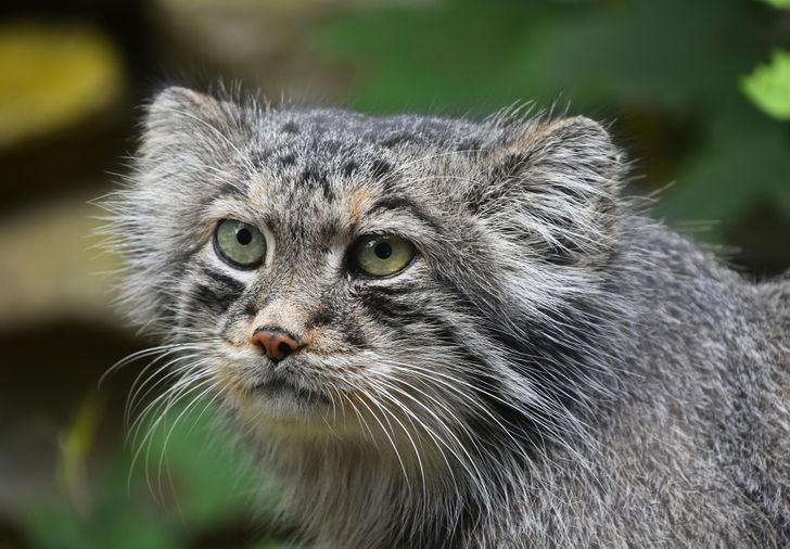 10 Dangerous Animals That We Tend to Think Are Cute and Vulnerable