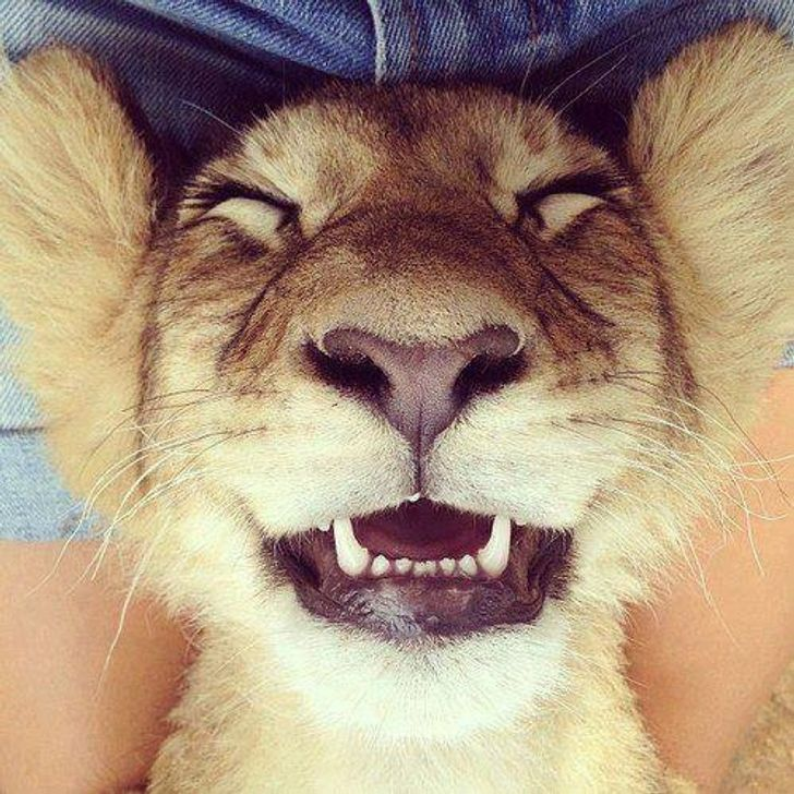 Who said animals can't smile?